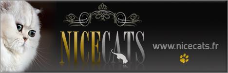 Nicecats